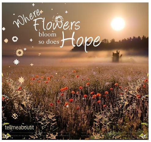 whereflowersbloom