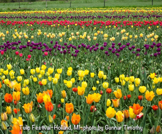 Tulip Festival~Holland, MI