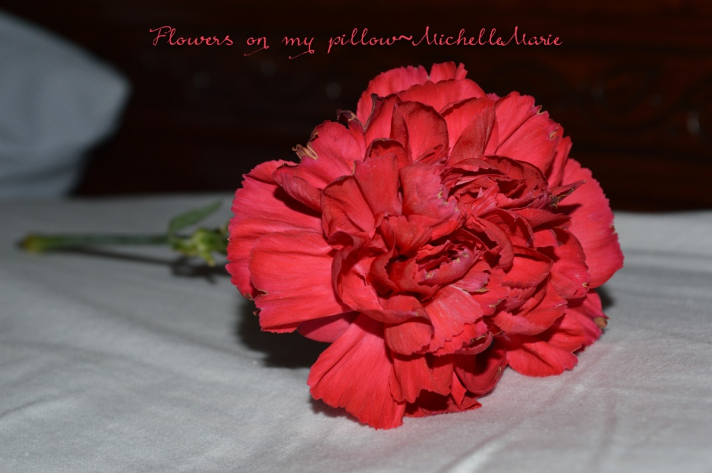 flowersonmypillow (1 of 1)