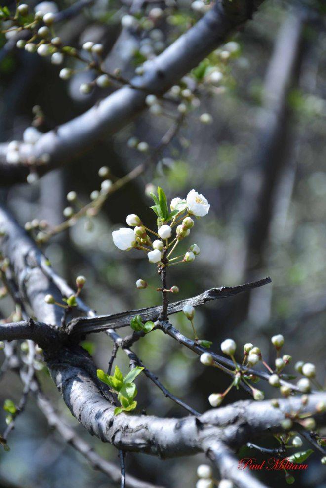 beauty blooming tree