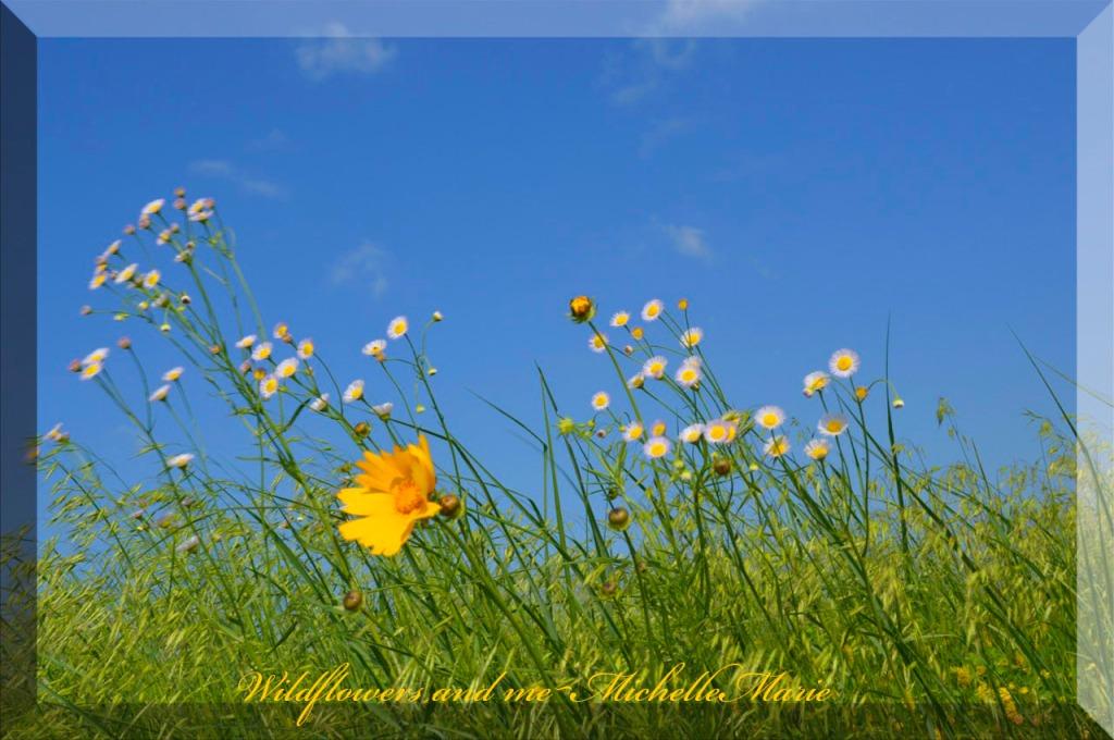 wildflowersnme