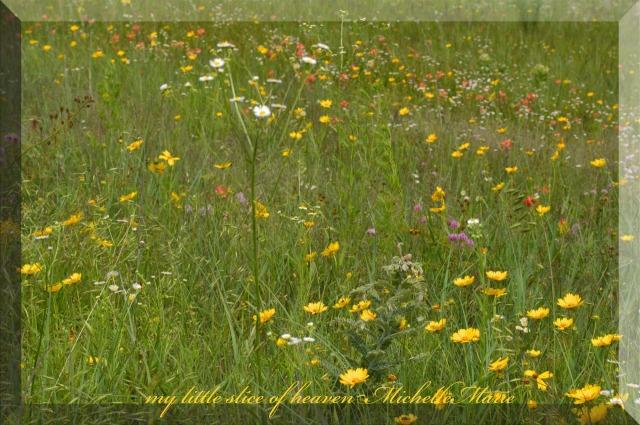 FieldofWildflowers