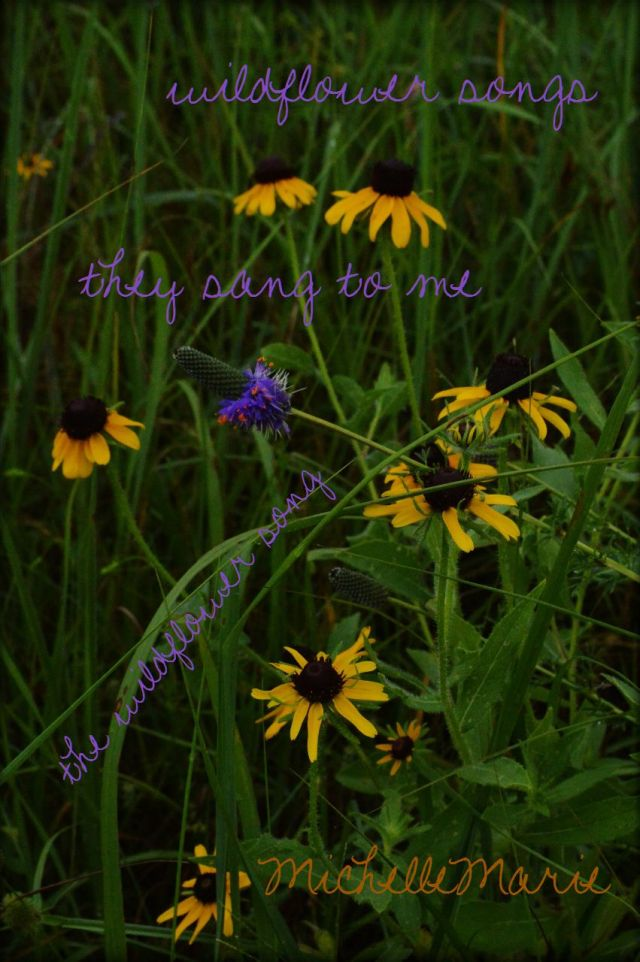 wildflowersongs
