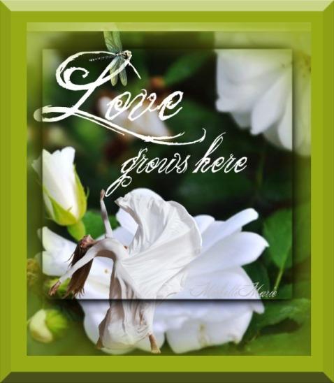 lovegrowsheretoo