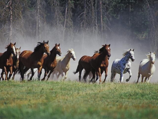 wildhorsebackground.public.domain