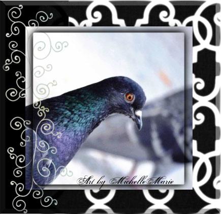 birdmanandthelamebird