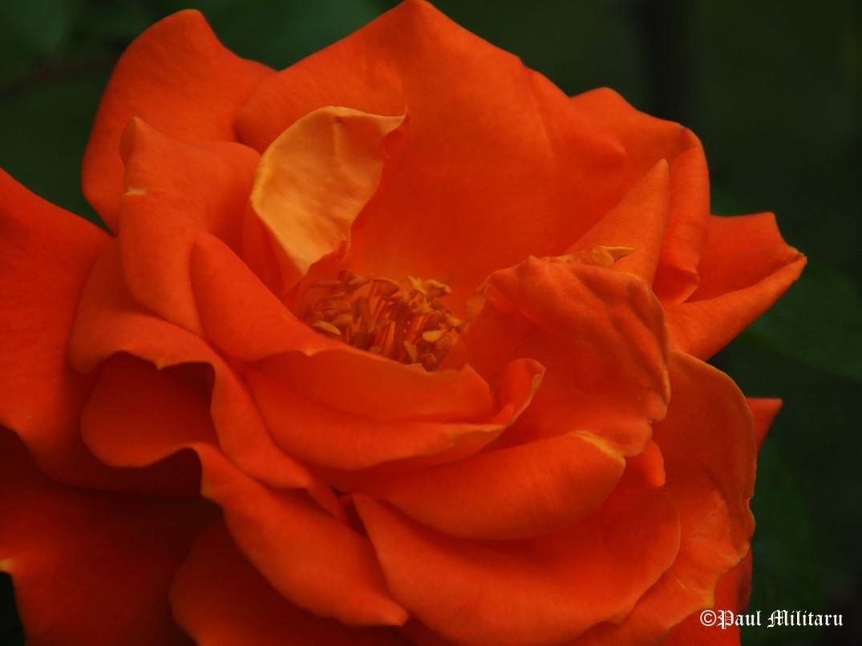 colors - orange