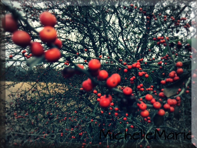 redberries-copy