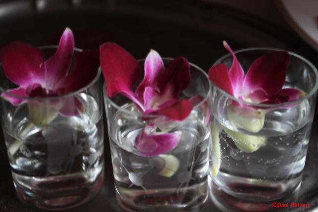 3 - orchids