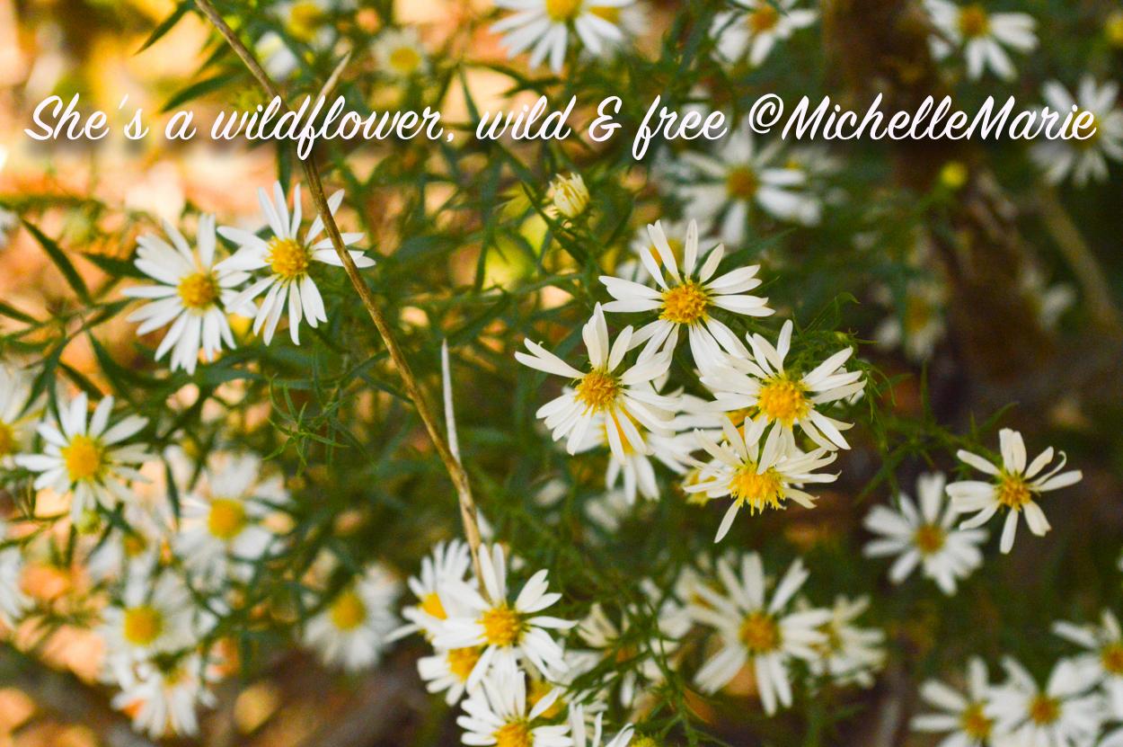 Oklahoma wildflowers